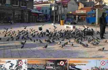 NEVJEROVATNA STVAR SE DESILA NAKON ŠTO SU OTJERALI golubove sa sarajevske Baščaršije!