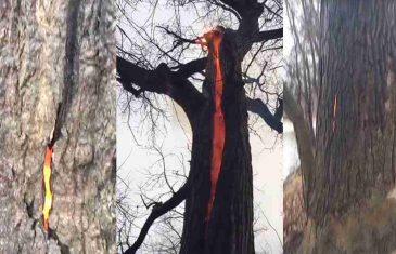OVO DO SAD NIJE VIĐENO: Šetači u SAD-u otkrili drvo koje gori iznutra bez vidljivog razloga (FOTO/VIDEO)