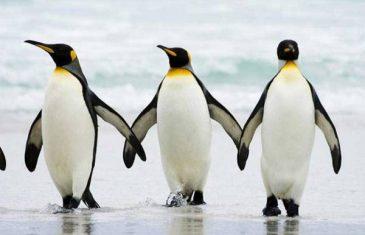 Doktori savjetuju: Po ledu hodajte poput pingvina
