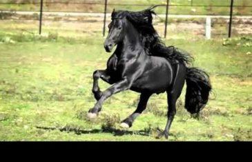 Kažu da je ovo najljepši konj na svijetu. Kad pogledate video, shvatit ćete i zašto!
