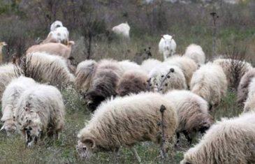 Bankrotirala: Folkerka napušta estradu i odlazi da čuva ovce!