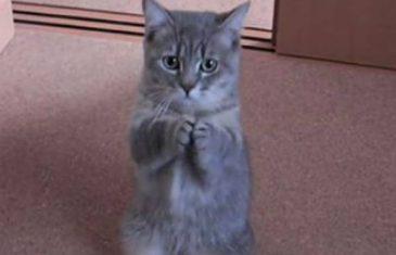 HIT NA INTERNETU: On je naučio svoju macu jedan neobičan trik koji će vas oduševiti (VIDEO)