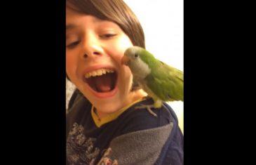 Papagaj vadi dječaku zub: Kamera sve snimila….