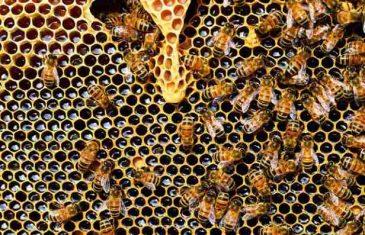 Ne dopustite da vam podvaljuju: Uz ove savjete možete prepoznati pravi med