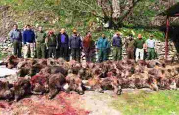 Kako se zabavljaju političari i biznismeni: Za jedan dan u nacionalnom parku ubili 57 divljih svinja