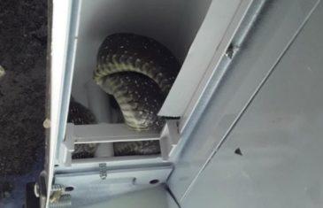 Našli zmiju u frižideru, a onda je počela prava borba: 'Pokušavala je gristi, a žena me samo molila da je ne ubijem'
