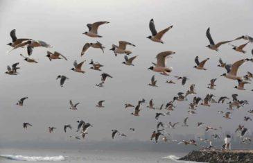 SA KORONOM STIGLE MNOGE PRJOMENE, ALI I ONE DOBRE: Priroda se budi, a ovako se ponašaju životinje i ptice