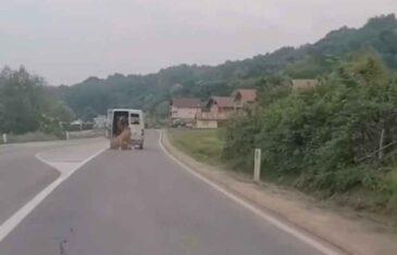 NEVJEROVATAN VIDEO IZ SREBRENIKA KRUŽI INTERNETOM: Vozaču krava ispala iz kombija, pogledajte šta je uradio…